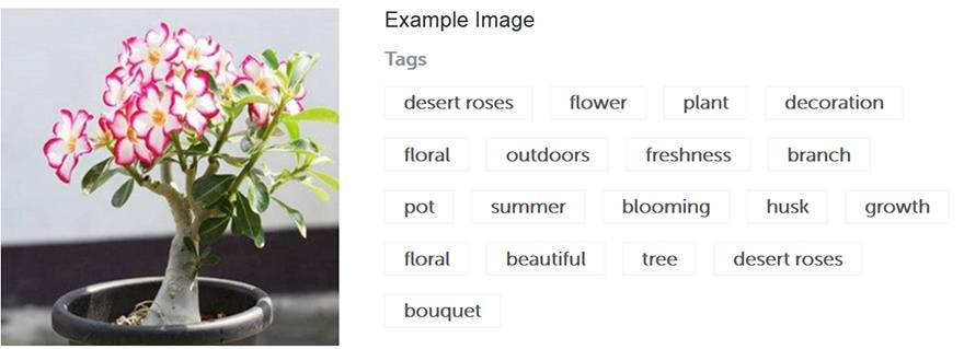 Blippar API recognizes and identifies content in images