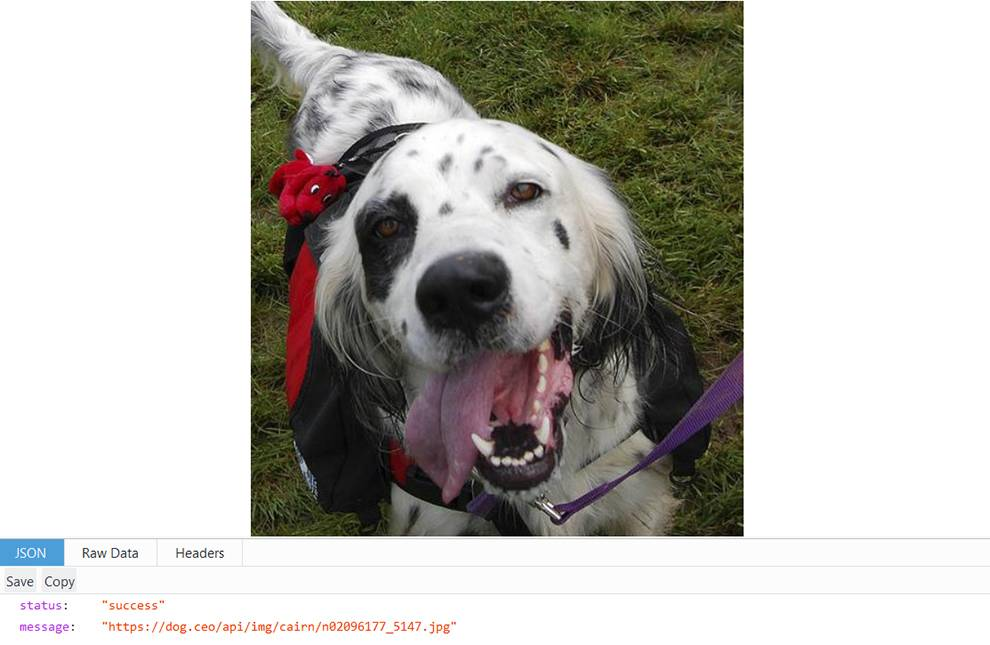 Get random images of Dogs with Doc CEO API