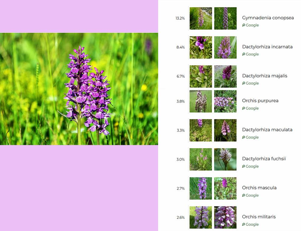Plant.id API returns names of plants based on uploaded images
